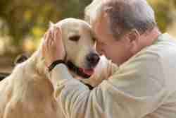 Do you want know more what are other healing benefits of pet therapy for senior? Check out this article for more details on how to stay healthy and active.