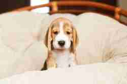 New Puppy Owner Tips and Tricks