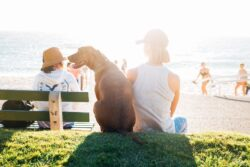 Summer is here and we love to spend time outdoor. Same for our furry friends. Here are a few simple tips on how to avoid heat exhaustion in dogs