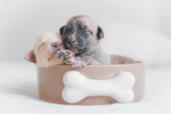 Does your puppy sleep schedule is all set? Sleep is a crucial when it comes to puppy physical and mental development. Here are few things to adjust it.