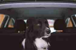 Dog travel anxiety is very common thing. Here our three proven tips on how to cope with it and make dog trip a lot more enjoyable.