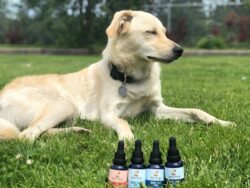 Cbd for joint pain in pets