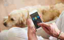 Try this list of must-have pet apps in 2020 for evry pet owner out there. Take care of his daily routine with one click on a phone