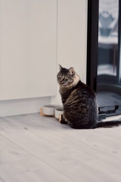 Cat Not Eating? Potential Reasons Why & How to Help: Unpacking reasons and solutions for your cats health concerns!