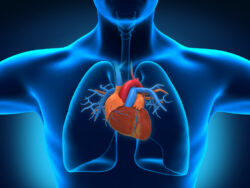 Research suggests that CBD can keep your heart healthy and heart-related symptoms at bay when needed. Check this out!