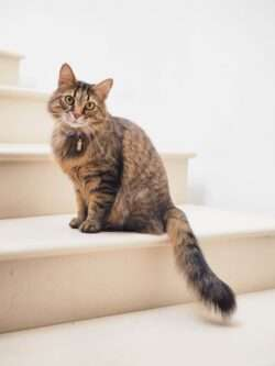 Bladder stones in cats can understandably be very painful. Preventing this is key, and treating it quickly is important.