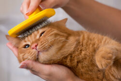 If you would like to up your cat grooming game, these tips for a well-preened pet will help, and our products at Pawt4Paws will too!