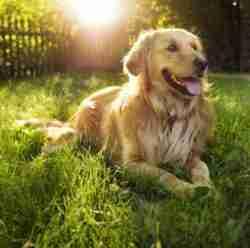 how to keep dog cool
